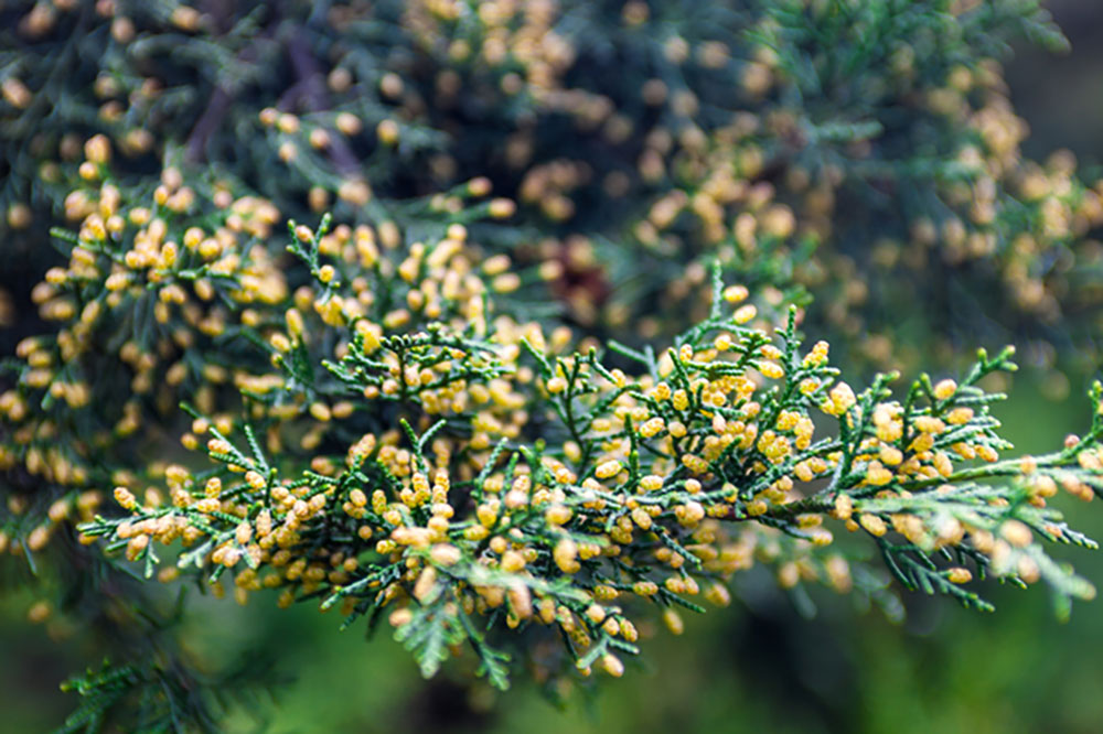秋も花粉シーズン